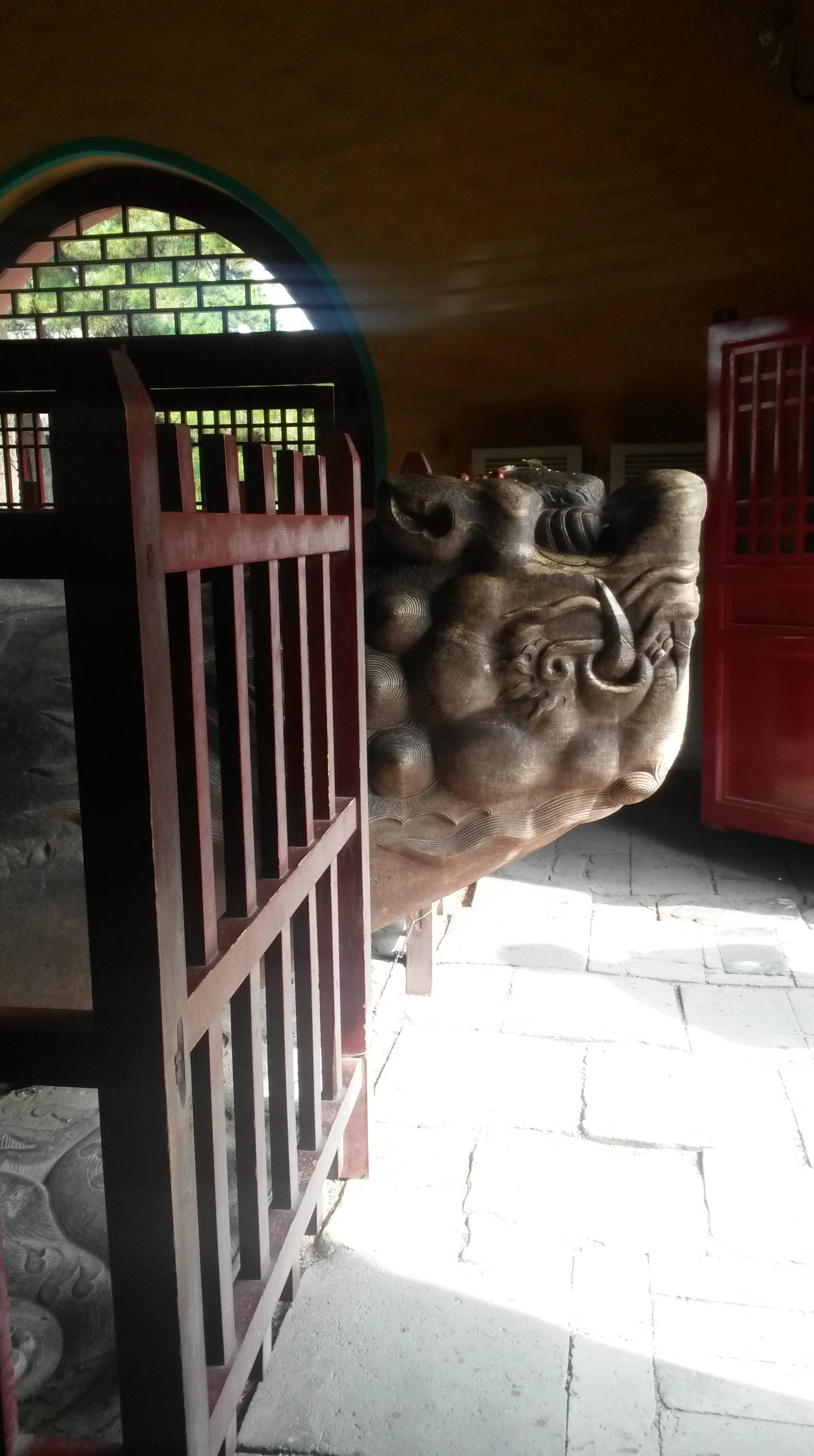 dragon found in china